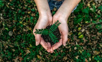 Ültess fát a jövőért!