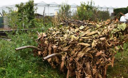 A faágak elszállítása folyamatos lesz