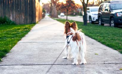 Kutyapiszok-zacskót és felszedő lapátot kapnak a gazdik