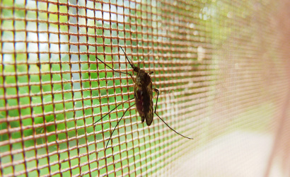 Szúnyoggyérítés lesz kedd este!
