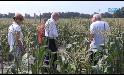 Embedded thumbnail for A miniszter szerint a csallóközi zöldségtermesztők több támogatást érdemelnek