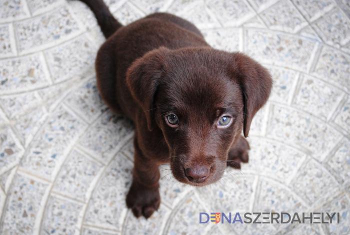 Hol találhatok állatbarát kiadó lakást?