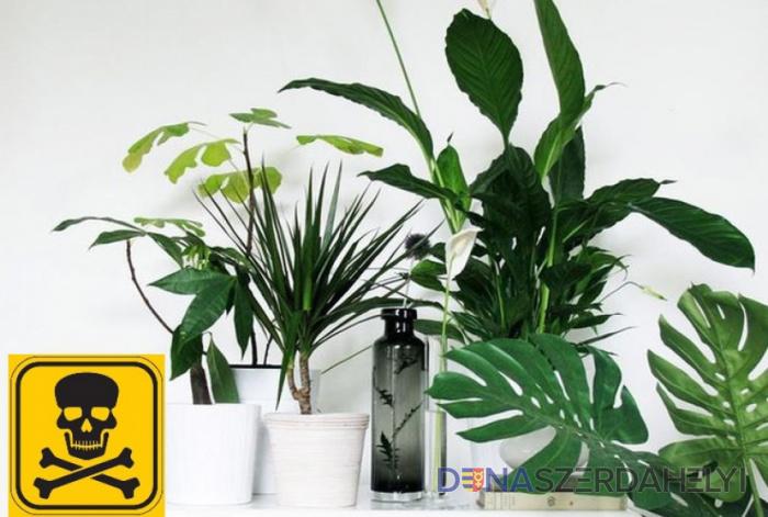 Mérgező szobanövények? Jobb, ha megszabadul tőlük
