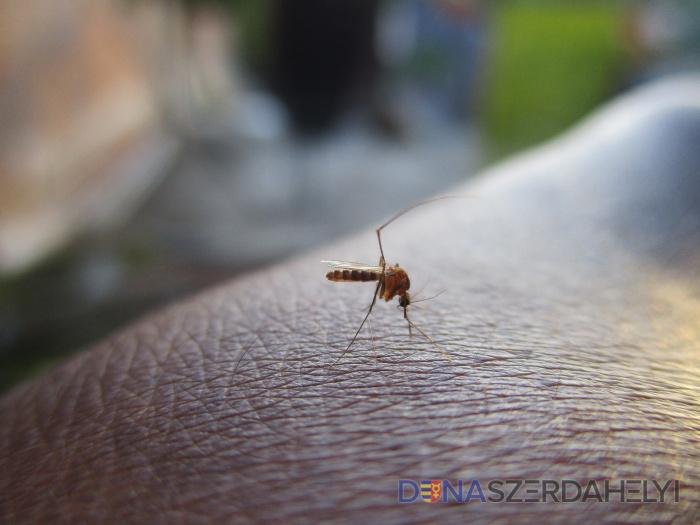 Figyelem! Csütörtökön este szúnyogirtás!