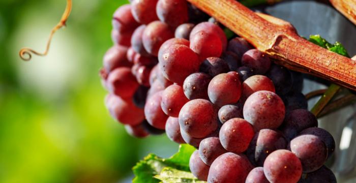 Az ereket is megfiatalítja a vörös szőlő