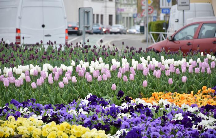 A tavasz lehelete