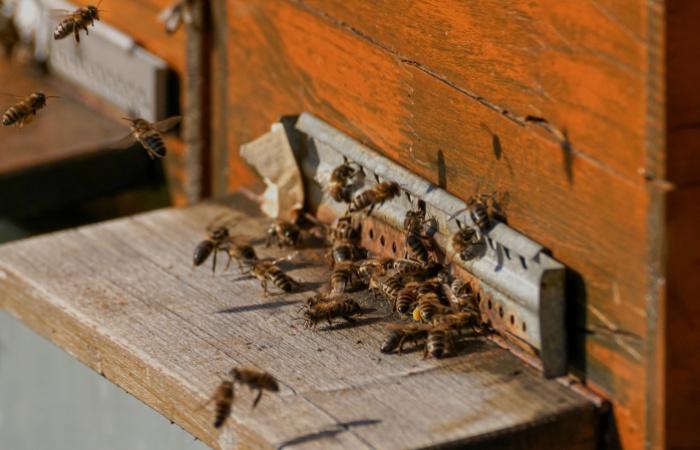 Újabb intézkedésekkel segítik a méhészeket