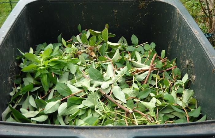 Idén utoljára november végén szállítják el a zöldhulladékot a családi házaktól