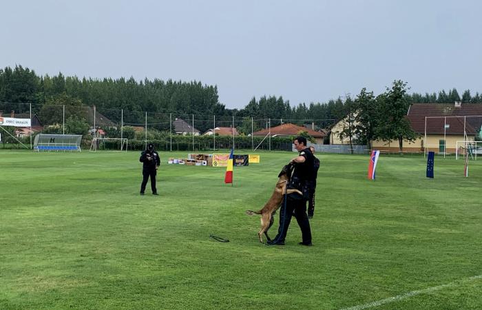 Több ország kutyás rendőrei a Csallóközben gyakorolnak