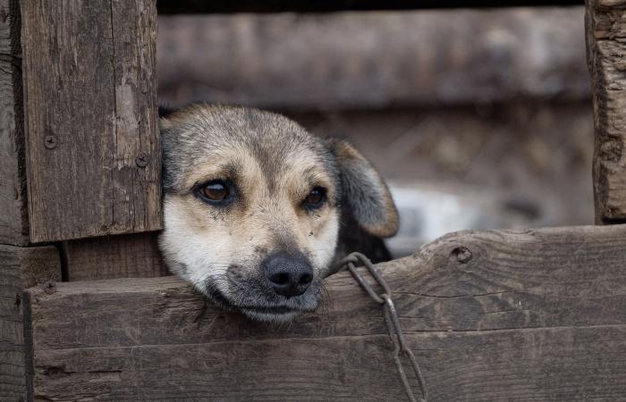 Az állatvédők folytatni akarják a küzdelmet a kutyák láncon tartása ellen