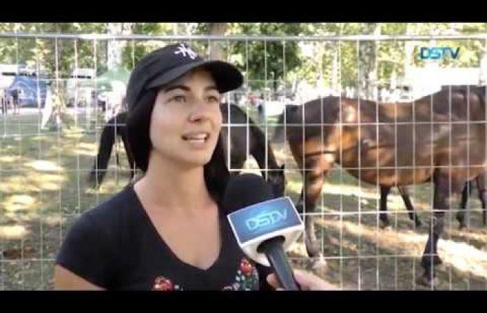 Embedded thumbnail for A felvidéki lovasok nem jártak sikerrel a Nemzeti Vágtán