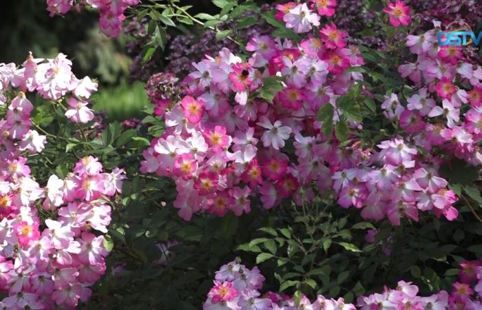 Embedded thumbnail for Kellemes percek a virágok királyának társaságában