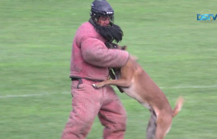 Embedded thumbnail for Egymástól szereztek gyakorlati tapasztalatokat a kutyás rendőrök