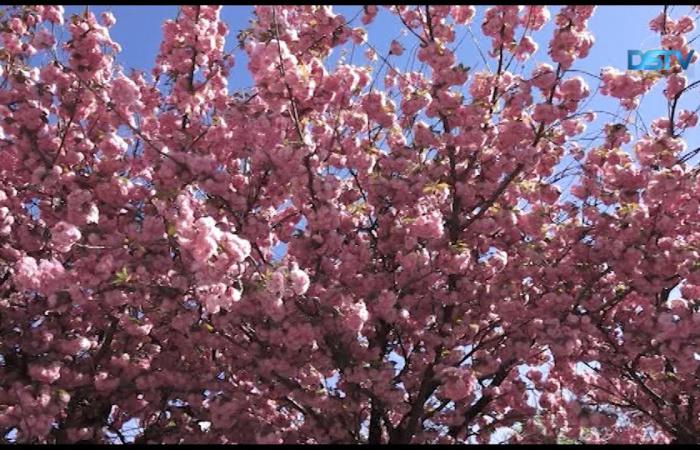 Embedded thumbnail for Tavaszi pillanatképek Dunaszerdahelyről