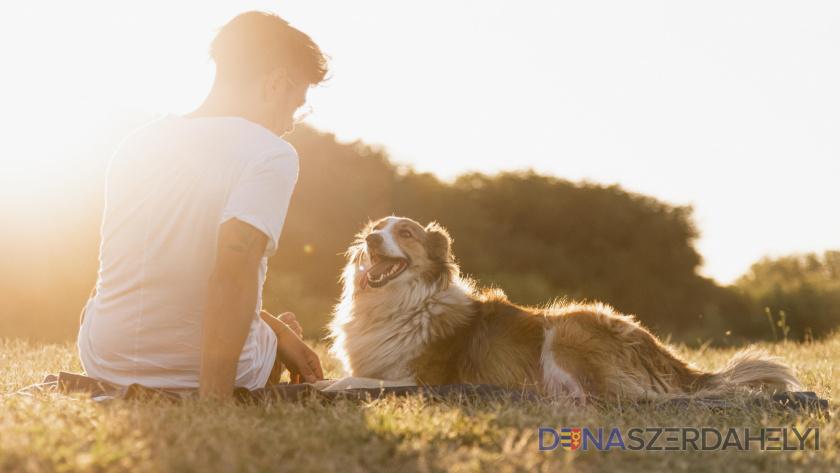 Júliusban már átvehetők az ingyenes kutyapiszok gyűjtő zacskók