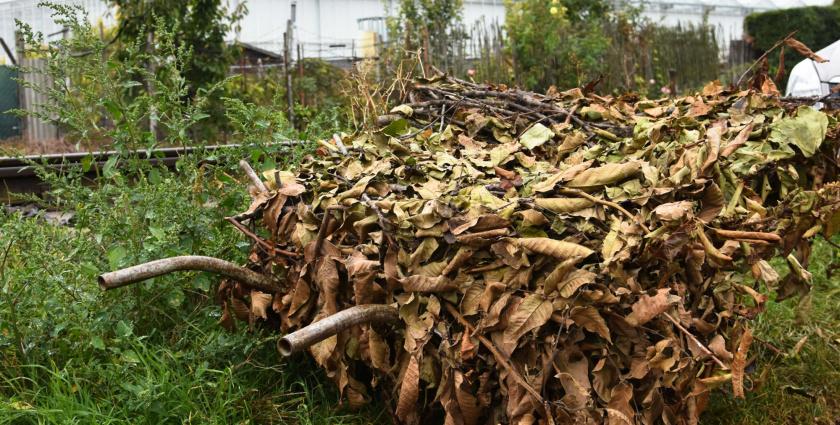 November 29. és december 2. között gyűjtik a faágakat