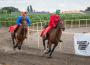Vágtató lovak, izgalmas pillanatok – erre számíthatnak a Felvidéki Vágtára kilátogatók