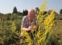 Bevált gyógynövények légúti panaszokra: a gyógyteától az izzasztó fürdőig a bükki füvesember patikájából